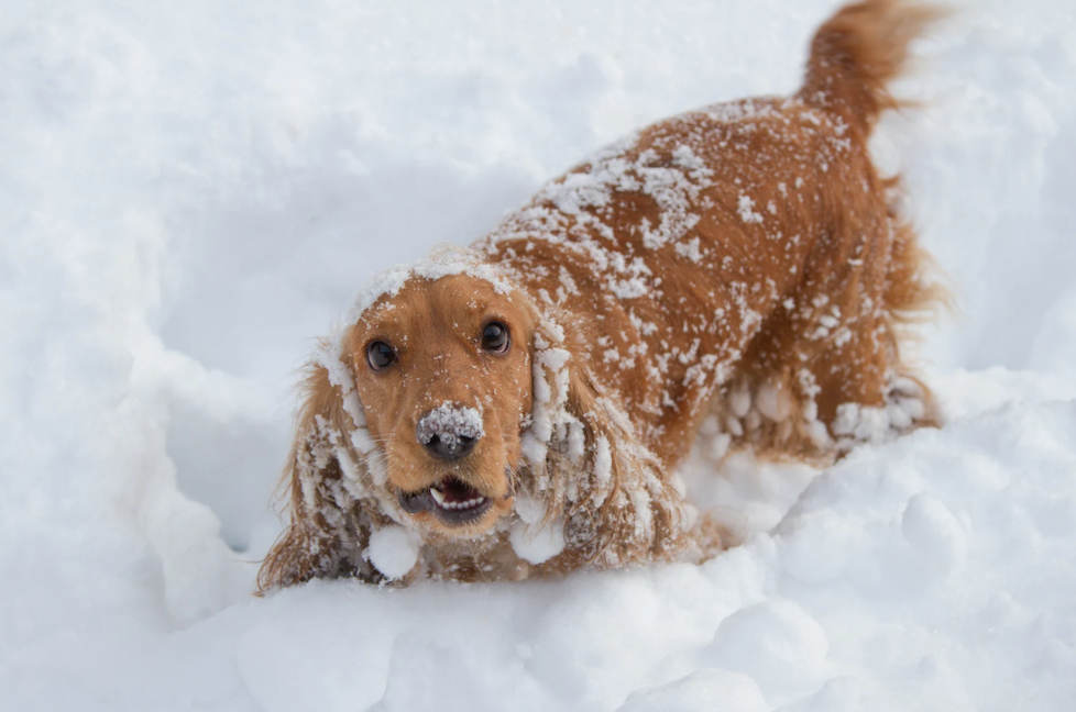WinterWoofs! Photo Competition