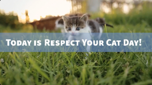 Respect your cat day!